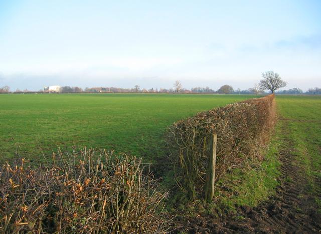 Pasture near The Grange