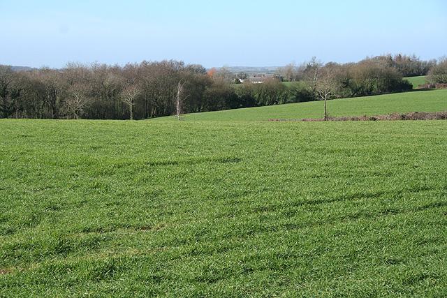 North Tawton: by Ashridge Moor Cross