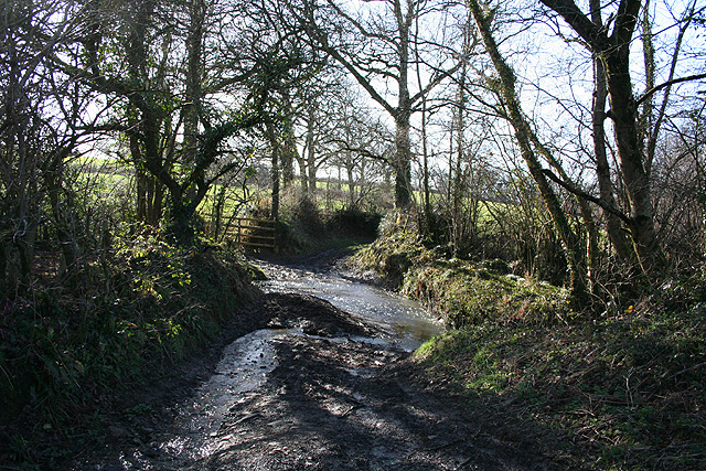 Bondleigh: a Taw stream