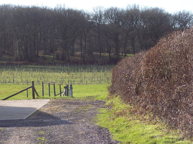 Footpath to Quarry Farm from Sutton Row