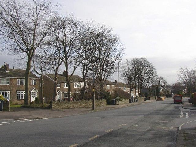 Trees, Crosland Road, Lindley cum Quarmby (near Huddersfield)