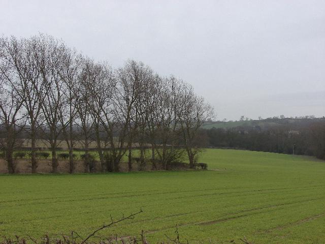 Wheat field near Barton