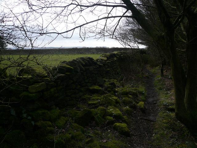 Farley Moor - Woodland Path