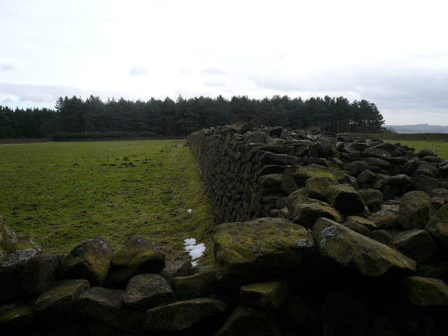 Farley Moor - Dry Stone Wall  and Field