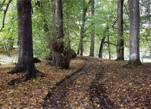 Track through woodland near Blairgowrie