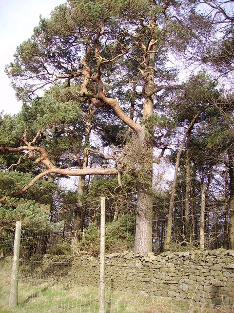 Black Wood, Claughton