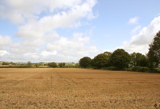Cornfield looking East