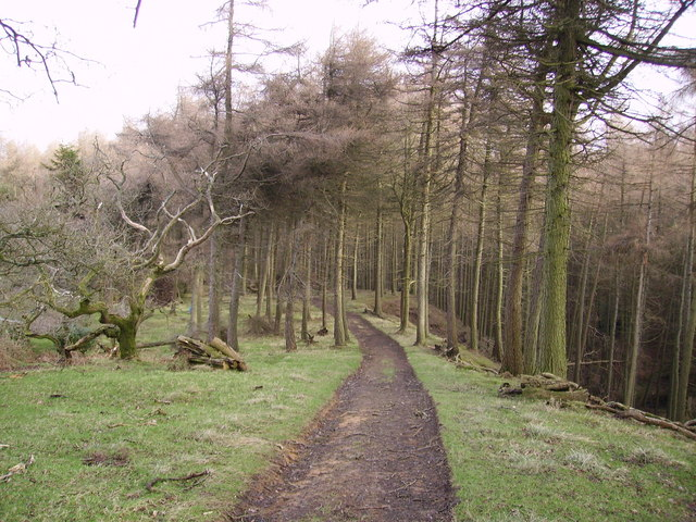 Track, Kirkby Gill Wood