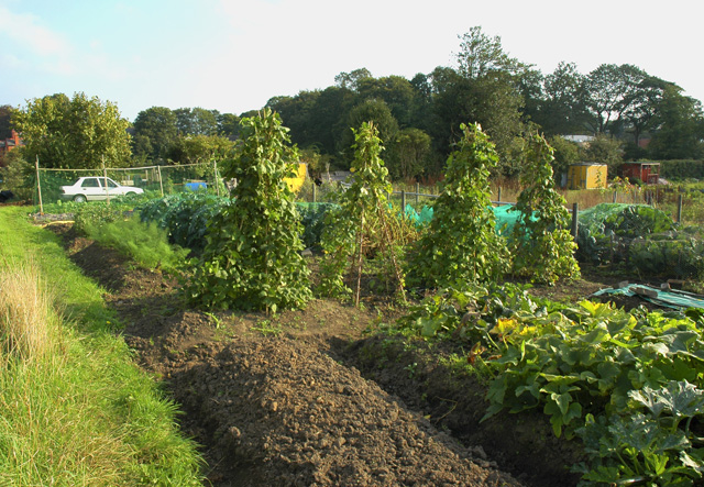 Erddig Road Allotment, Plot 10