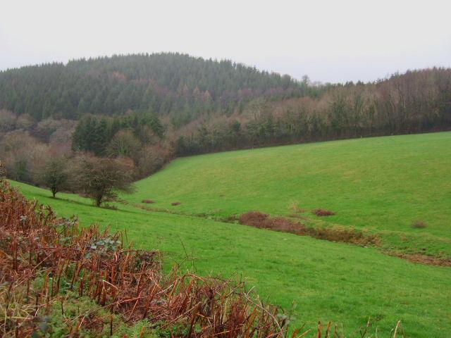 Morwell Wood