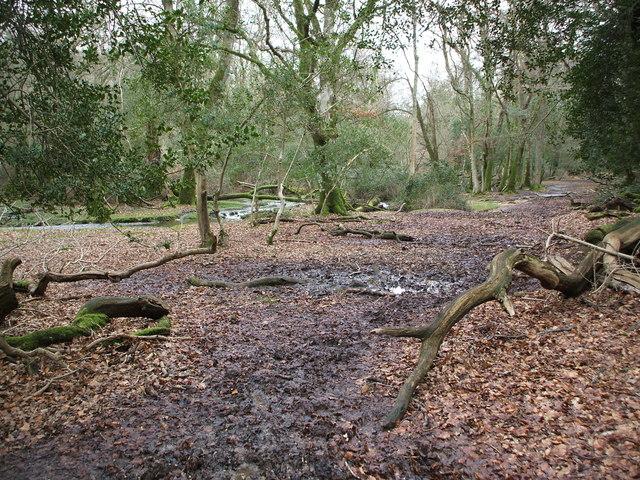 Anses Wood