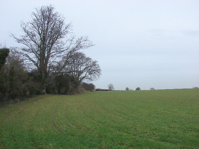 Wheat field by Lyehill Quarry