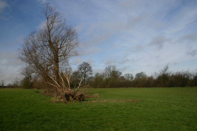 Meadow at Wetherden