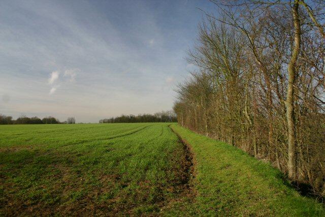 Field margin near Wetherden