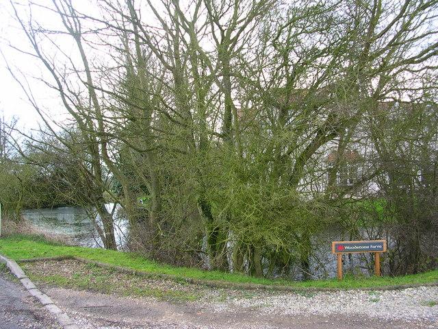 Behind the woods is Woodstone Farm