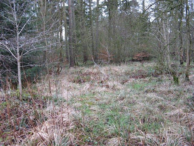Woodland, Hillhead