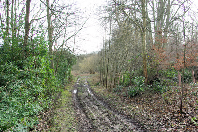 Track, Jews Wood