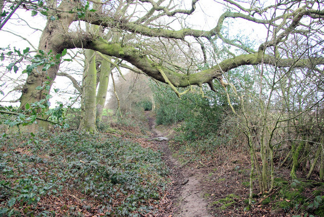 Footpath towards Pembury