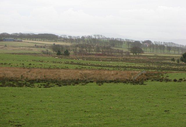 Wetland alongside the Through Burn