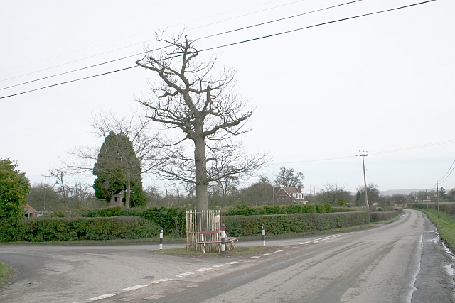 The Jubilee Tree