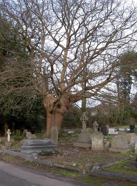 Oak tree & Squirrel