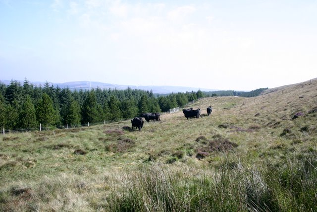 Rough grazing and woodland at Pen y Garn