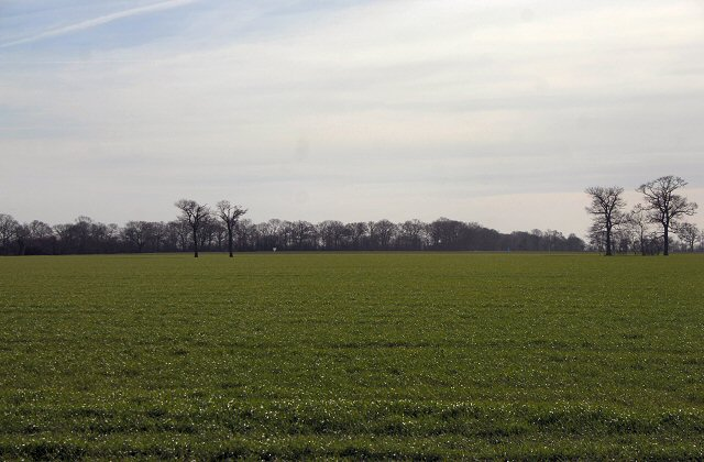 Flat Suffolk field