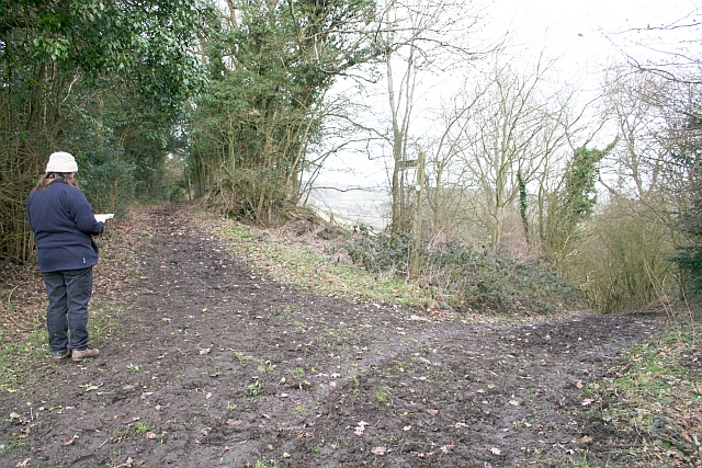 Junction of Paths on Marcle Hill