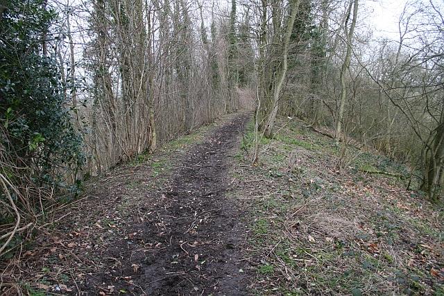 The Narrow Ridge on Marcle Hill
