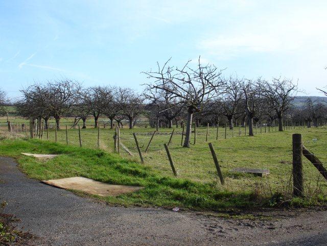 Orchard at Denley Hill Farm