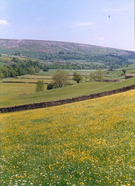 Hay meadow at Harkerside