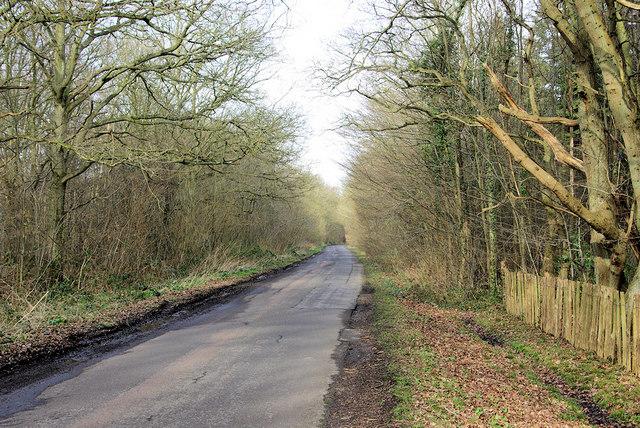 Lane through Orlestone Forest