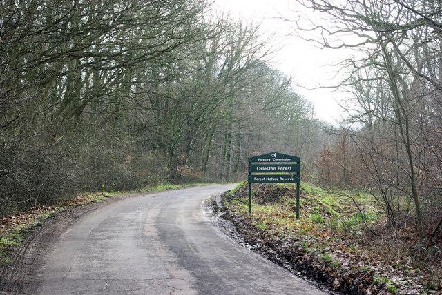 Orlestone Forest  Northern Boundary