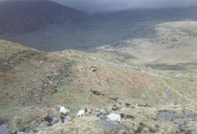 Sheep above Nant Gwern y Gof