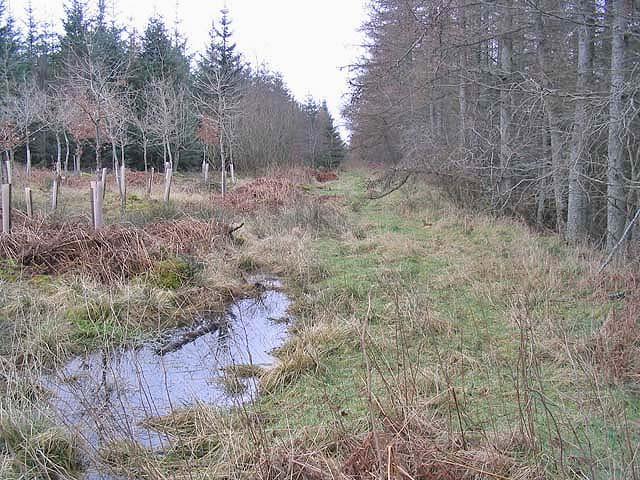 Big Wood Plantation