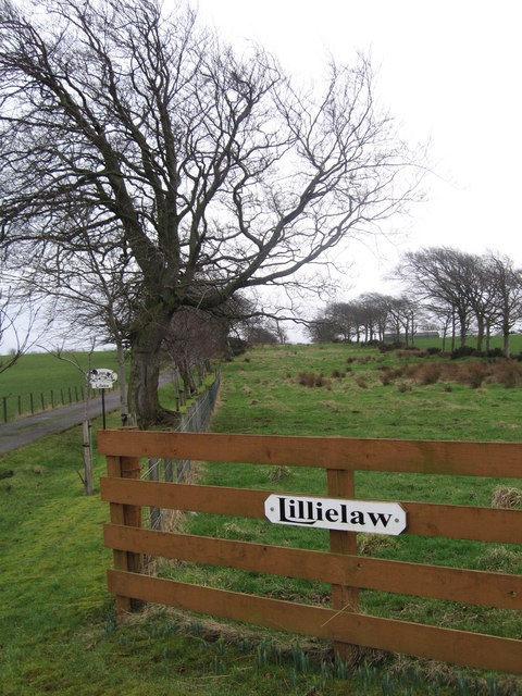 Lillielaw