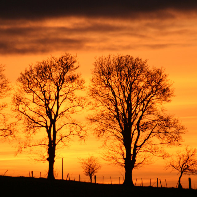 Setting sun behind treelined fence at Muiralehouse