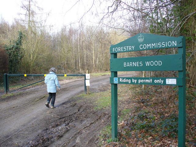 Barnes Wood