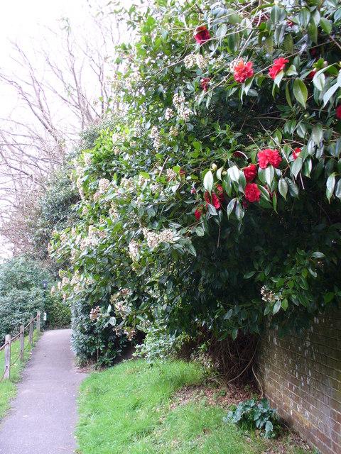 Footpath at Sedlescombe Church