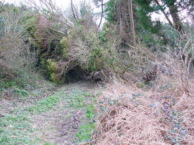 Blocked Footpath at Sedlescombe