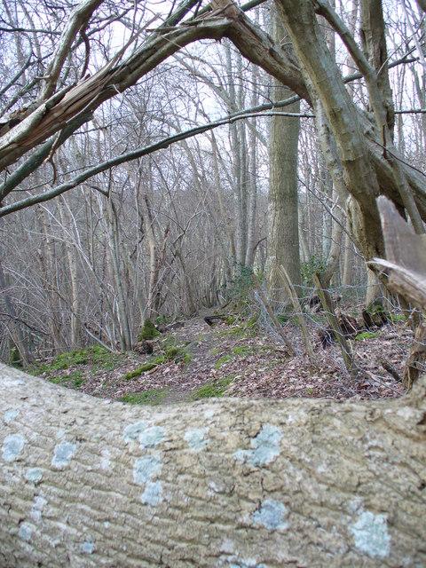Blocked Path near Beech Farm