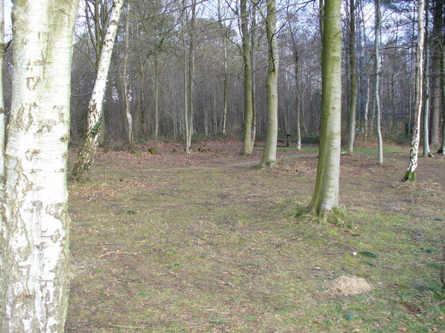 Picnic Site, Footland Wood