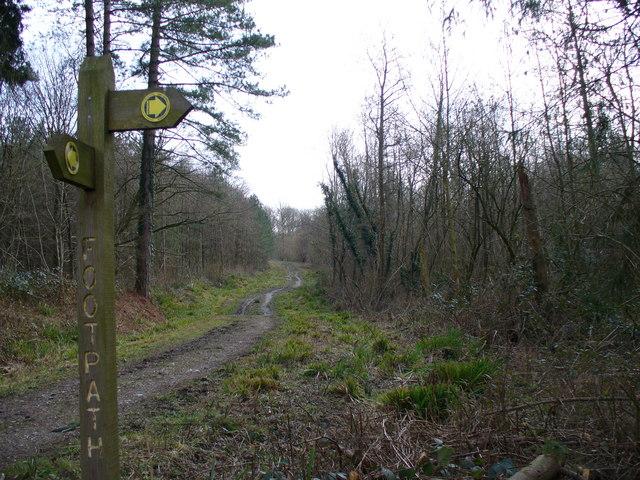 Path Junction, Barnes Wood