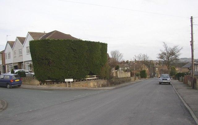 Giant hedge, Lands Lane, Guiseley