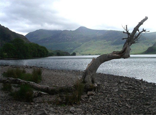 Crummock Water shoreline with washed up tree trunk