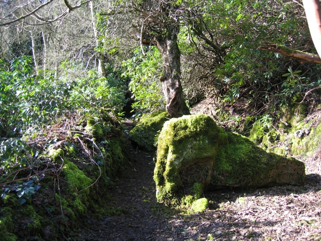 Path in Nant y Ffrith Woodland