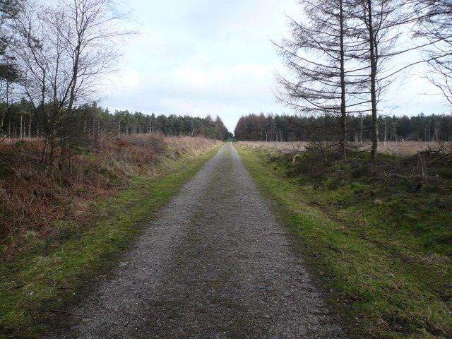 Bottom Moor - Main Woodland Path