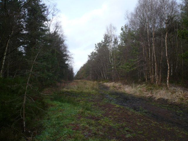 Bottom Moor - Main Woodland Path