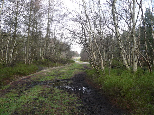 Bottom Moor - Woodland Path