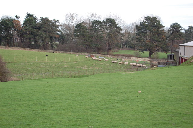 Rounding up sheep, Grange Farm, Saltwood